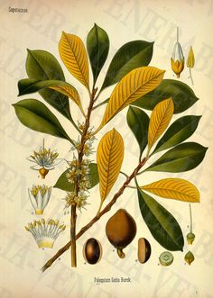 1887 Collection of 26 Medicinal Botanical от LithographLibrary
