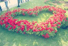 Geranium heart