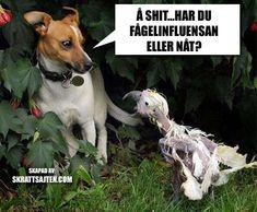 Har du fågelinfluensan eller nåt? - Skrattsajten