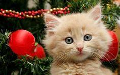 Christmas Kitty Kittens Cutest Cute Cats Cats And Kittens Christmas Kitty Funny