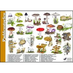 per 5 All Nature, Amazing Nature, Drawing Sketches, Drawings, Nature Drawing, Fauna, Garden Plants, Wilderness, Stuffed Mushrooms