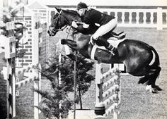 Stroller (1950 - 1986) the only pony to compete at the Olympics in Show Jumping, owned & ridden by Marion Mould (nee Coakes). A bay 14.1 hds TB x Connemara gelding. A member of the British team he competed in the 1968 Mexico Olympics. The pair won Individual Silver. Stroller jumped 1 of only 2 clear rounds in the Olympic individual championship. In 1967, Stroller won the Hickstead Derby & at 20 the 1970 Hamburg Derby. He died of a heart attack at 36 in 1986, after 15 years of happy…