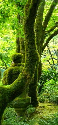Moss covered stone lantern and tree / Japan 石灯籠