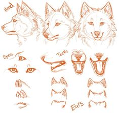 Drawing Step By Step Wolf Tutorials 25 Ideas Animal Sketches, Animal Drawings, Cute Drawings, Wolf Drawings, Drawing Animals, Drawing Poses, Drawing Sketches, Drawing Step, Drawing Ideas