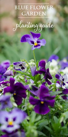 Suggestions for planting a blue flower garden with both perennials and annuals. Grow the plants from seed or start with bedding plants. Vary bloom size and height to add interest. Stagger the blooming periods so your garden will be colorful for the whole growing season! #Sponsored