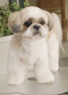 ラッキー☆スタイル --愛犬の友 ヘアスタイルカタログ--