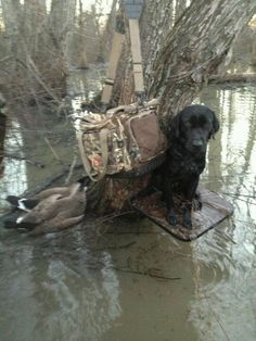 Nellie in Mississippi 2013 Waterfowl Hunting, Duck Hunting, Bradley Mountain, Mississippi
