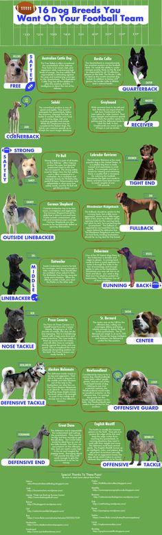 Brinkley Featured as DoggieNation's Offensive Tackle! English Mastiff, Football Team, Dog Breeds, Pitbulls, Infographic, Adventure, Dogs, German, Deutsch