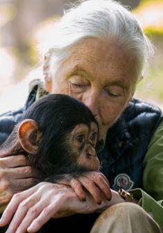 Soixante années passées à étudier les chimpanzés, protéger leur habitat, ont fait de Jane Goodall une infatigable militante de l'écologie planétaire Jane Goodall, Wildlife Biologist, People Of Interest, Orangutan, Zoology, Primates, Interesting Faces, Funny Animal Pictures, Jouer