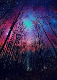 Milky Way colored sky and winter trees, made visible by time lapse. Beautiful Sky, Beautiful Landscapes, Beautiful World, Beautiful Places, Pretty Sky, Amazing Places, Beautiful Scenery, Simply Beautiful, Galaxy Wallpaper