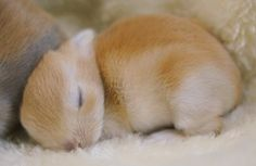 かわいい動物 - 全432枚 Twitterで話題の人気画像まとめ 新着順2ページ目 Funny Bunnies, Baby Bunnies, Cute Cats, Animals And Pets, Baby Animals, Funny Animals, Hamsters, Cute Bunny Pictures, Beautiful Rabbit