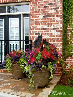 Front Porch Foliage