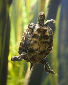 Building Outdoor Turtle Ponds | eHow.com