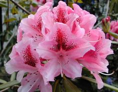A wonderland of rhododendrons, more than 28 snowy peaks, over 80 glaciers and lakes makes Sikkim a land full of wonder. http://www.zeropoint.co.in/sikkim.php