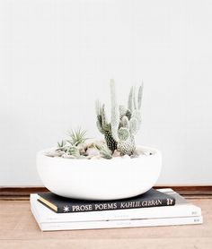 A cactus is a superb means to bring in a all-natural element to your house and workplace. The flowers of several succulents and cactus are clearly, their crowning glory. Cactus can be cute decor ideas for your room. Succulent Bowls, Cacti And Succulents, Planting Succulents, Planting Flowers, Decoration Cactus, Decoration Plante, Diy Garden, Indoor Garden, Spring Garden