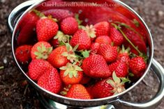 Strawberries hitting the stores is like the kick-off to spring. The first {affordable and in-season} round usually shows up around late March/early April {mostly from California}. If you have your own strawberry patch, you'll have to wait a bit longer. Strawberry Patch, Strawberry Recipes, Canning Tips, Canning Recipes, Jam Recipes, Freezer Recipes, Fruit Recipes, Drink Recipes