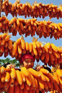 Corn Season in Ha Giang #travel #HaGiang #Vietnam