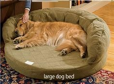 Our orthopedic dog beds are made for older dogs with incontinence. This orthopedic dog bed addresses both issues with therapeutic memory foam covered by a highly absorbent fabric on the sleeping area and bolster. Dog Steps For Bed, Echo Bedding, Memory Foam, Designer Dog Beds, Cool Dog Beds, Doggie Beds, Dog Ages, Bolster Dog Bed, Orthopedic Dog Bed