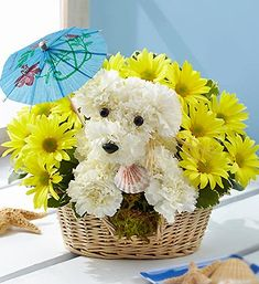 Send beautiful flower arrangements to brighten someone's day! Whether looking for a floral arrangement of roses or mixed flowers, find something perfect! Bd Design, Floral Design, Puppy Flowers, Flower Dog, Unique Flower Arrangements, Balloon Flowers, Arte Floral, Flower Delivery, Summer Flowers