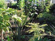 Urban garden just planted by to blithely go, via Flickr