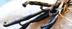 Hjemmelaget vaniljesukker Tahiti, Octopus, Animals, Animales, Animaux, Animal, Calamari, Animais, Diving Regulator