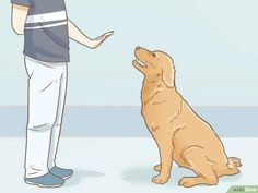 How to Train Your Service Dog Without a Professional Trainer. A properly trained service dog is a real asset to a person with a disability. Service dogs accompany their handler everywhere, including in public places that are usually. Service Dog Training, Service Dogs, Dog Training Tips, Chihuahua Dogs, Puppies, Easiest Dogs To Train, Dog Training Techniques, Dog Facts, Aggressive Dog