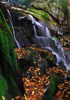 Elakala Falls (West Virginia) by Joe Z