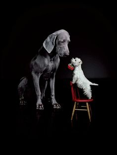 """""""I have a present for you"""" said McDuff to the great dane."""