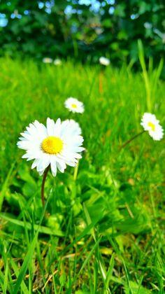 Green printemps