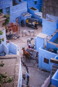 INDIA - Blue City of Jodhpur