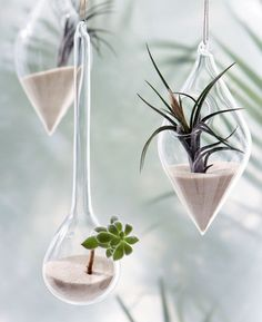Air plants. Very nice presentation!  http://unique-valentine-gift.blogspot.com/2012/11/unusual-air-plants-home-decoration.html