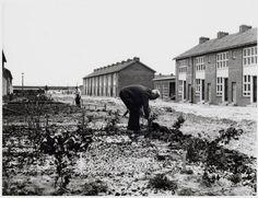19 oktober 1955 gingen de eerste mensen in Slotervaart wonen  De gemeente maakte er een feestje van en de nieuwe bewoners kregen een taart  en ze kregen zelfs een tuintje!
