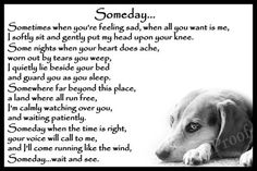 Dog Grief, Pet Loss Grief, Loss Of Dog, Miss My Dog, Miss You, Pet Quotes Dog, Animal Quotes, Animal Poems, Quotes Rainbow