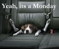 car seats, funny dogs, funny humor, mondays, happy monday, funny photos, monday quotes, dog funnies, blue dog
