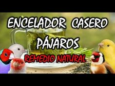 ENCELADOR CASERO para PAJAROS | Remedios naturales |