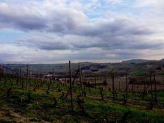 La Morra, vigne