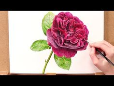 How to paint a realistic red rose in watercolour with Anna Mason - YouTube