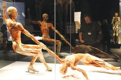 A pair of ice dance skaters is posed in their athletic form in Body Worlds and the Brain, an exhibit currently on display at OMSI, which uses a revolutionary human preservation method called Plastination.