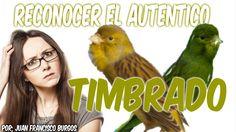 RECONOCER TIMBRADOS AUTENTICOS