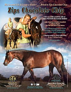 Zips Chocolate Chip- All-time leading sire of AQHA western pleasure horses. AQHA world and congress champion.