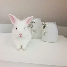 Marcel 😍 #bunny #rabbit