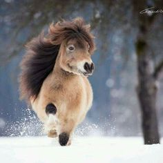 Cheval miniature - Horses Funny - Funny Horse Meme - - Cheval miniature The post Cheval miniature appeared first on Gag Dad. Pretty Horses, Horse Love, Beautiful Horses, Animals Beautiful, Cute Baby Horses, Cute Little Animals, Cute Funny Animals, Cute Animal Pictures, Horse Pictures