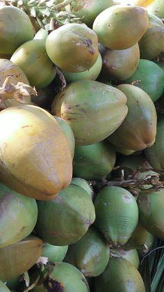 Cocococonut so refreshing