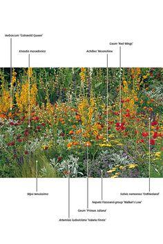 Plants identified
