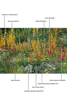 Great planting combination with mainly yellow, then red and purple flowers.