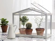 IKEA - Create a miniature garden by combining potted plants with a SOCKER greenhouse. Perfect to keep the cats from eating your plants! Indoor Greenhouse, Indoor Planters, Indoor Garden, Home And Garden, Herb Garden, Ikea Plants, Potted Plants, Garden Power Tools, Pinterest Garden