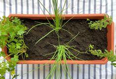 Preencha o restante do vaso com terra, deixando dois dedos de distância até o fim da jardineira. Pressione um pouco para que as mudinhas fiquem firmes, mas não a ponto de danificar as raízes, ok? Foto: Arquiteca Projetos.