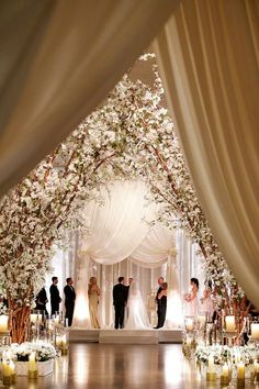 Gorgeous blossoming tree ceremony
