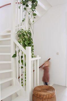my scandinavian home: The home of a Dutch design duo hanging plants Macrame Hanging Planter, Hanging Plants, Indoor Plants, Indoor Herbs, Hanging Gardens, Indoor Gardening, Color Verde Claro, Wall Trellis, Stair Well