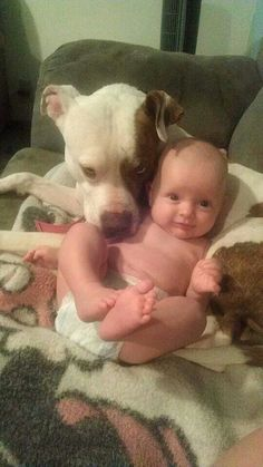 """""""Don't you dare mess with my tiny human! Animals For Kids, Cute Animals, Nanny Dog, Pit Bull Love, Mans Best Friend, I Love Dogs, Animals Beautiful, Pit Bulls, Cute Kids"""